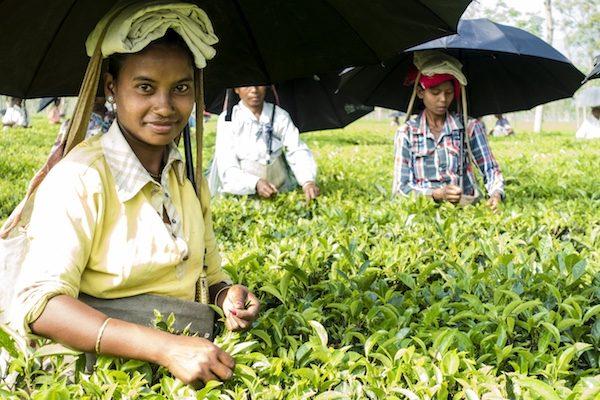 Zmieńmy razem świat herbaty! HErbata organiczna herbata Home HErbata